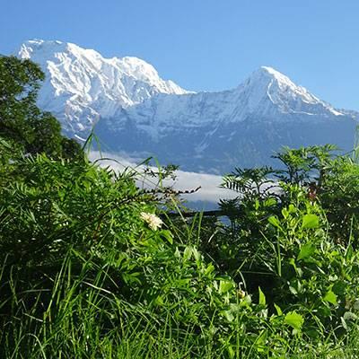 La oveja Pepi en las Annapurnas